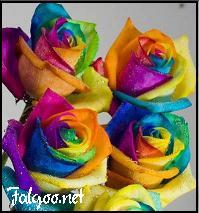 فال گل